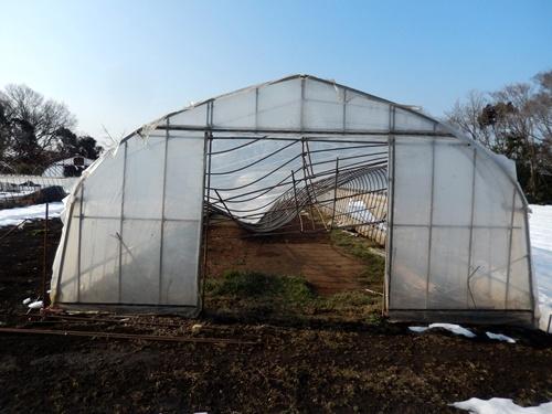 2014.2.21 大雪のハウス被害(林農園) 013 (4)