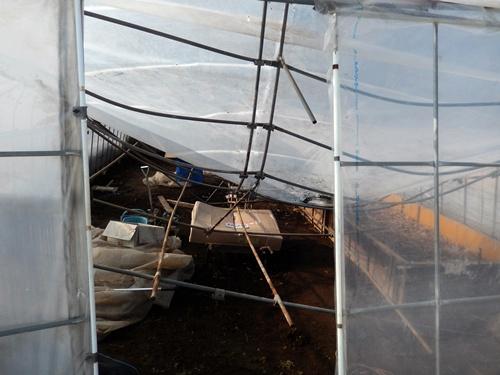 2014.2.21 大雪のハウス被害(林農園) 013 (3)