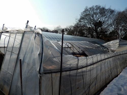 2014.2.21 大雪のハウス被害(林農園) 013 (2)