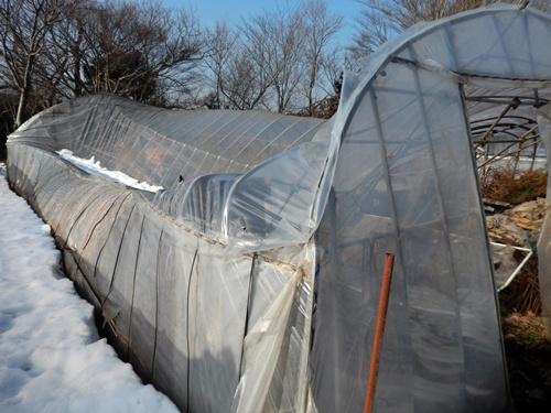 2014.2.21 大雪のハウス被害(林農園) 013 (1)