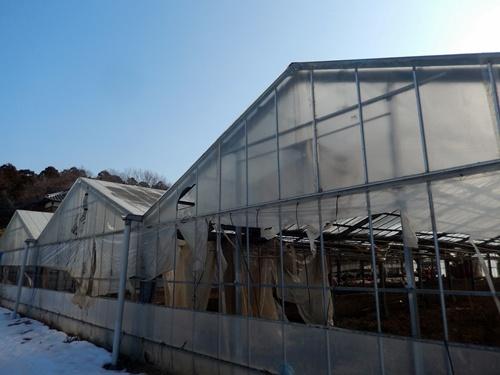 2014.2.21 大雪のハウス被害(林農園) 013 (7)