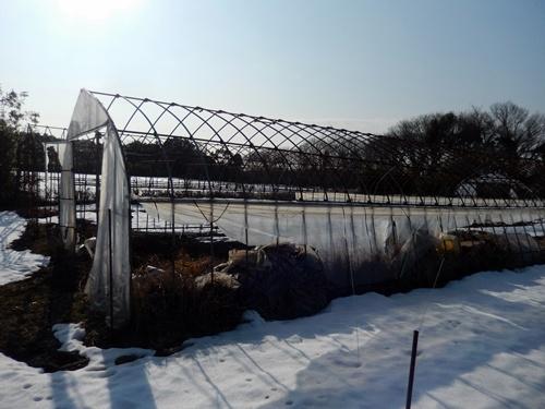 2014.2.21 大雪のハウス被害(林農園) 013 (6)