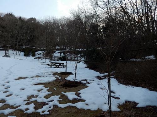 2014.2.24 アカデミア公園の桜(苗木) 014