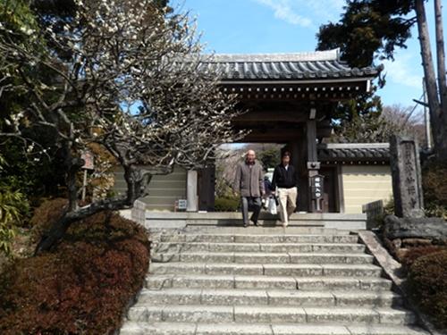 2014.3.9 鎌倉浄妙寺 (鎌足桜) 019
