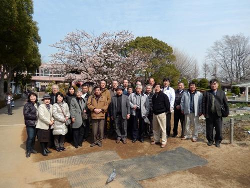 2014.3.9 鎌倉フラワーパーク (玉縄桜) 032 (2)