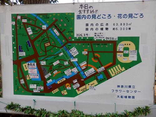2014.3.9 鎌倉フラワーパーク (玉縄桜) 032 (1)