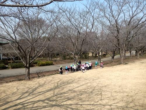 2014.3.12 青葉の森公園 (鎌足桜) 041 (3)