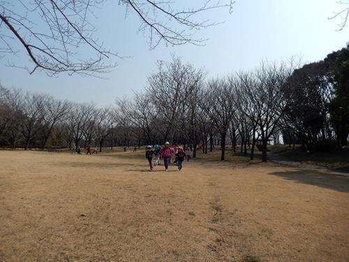 2014.3.12 青葉の森公園 (鎌足桜) 041 (1)
