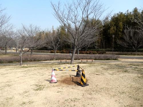 2014.3.12 青葉の森公園 (鎌足桜) 041 (4)