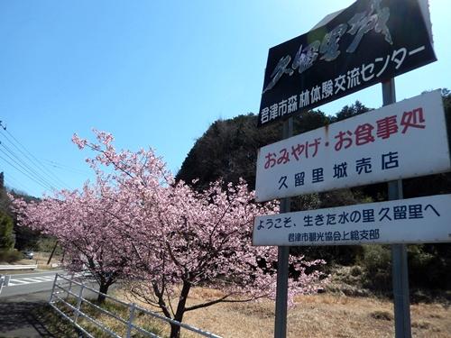 2014.3.22 河津桜 (久留里) 039
