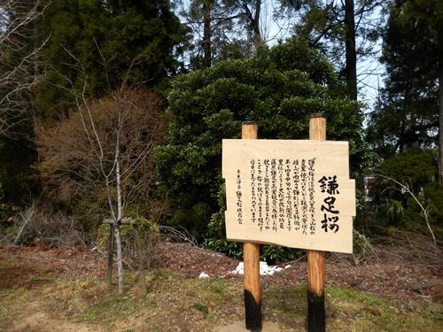 2014.4.2 桜開花 (徳蔵寺) 013