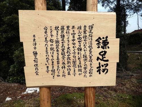 2014.4.2 桜開花 (徳蔵寺) 014