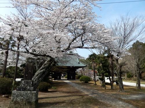 2014.4.2 桜開花 (徳蔵寺) 007