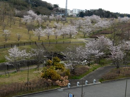 2014.4.6 桜 (矢那川ダム) 043 (2)