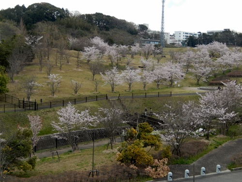 2014.4.6 桜 (矢那川ダム) 043