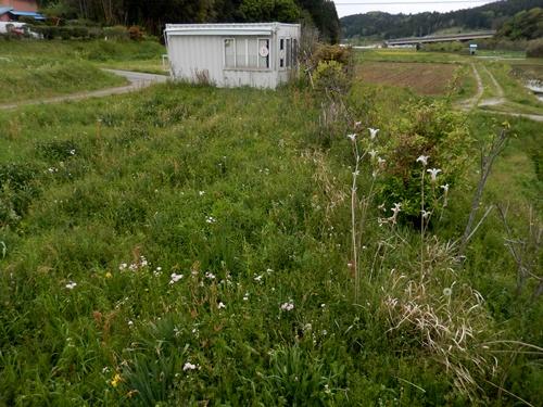 2014.4.28 畑の草(果樹園ほか) 019