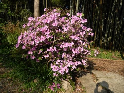 2014.5.8 春の自宅(庭ほか) 001 (18)
