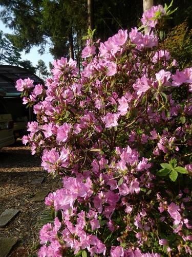 2014.5.8 春の自宅(庭ほか) 001 (17)