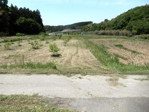 2014.5.8 春の畑の草刈(果樹園ほか) 001 (6)