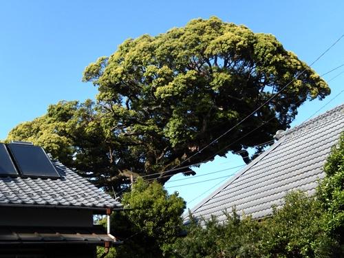 2014.5.1 春の庭その2 012