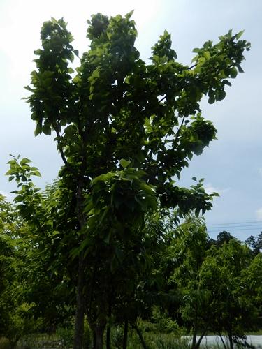 2014.5.24 春の果樹園 017 (4)