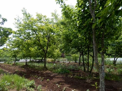 2014.5.24 春の果樹園 017