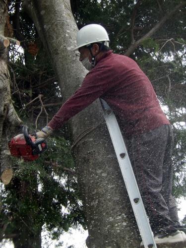2014.6.10 大木を切る 025 (5)