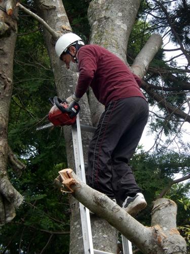 2014.6.10 大木を切る 025