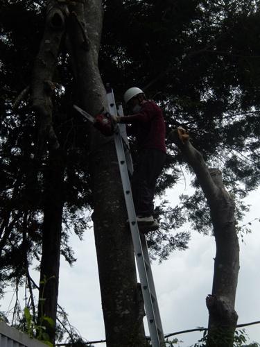 2014.6.10 大木を切る 025 (6)
