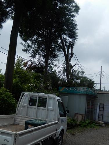 2014.6.10 大木を切る 025 (4)