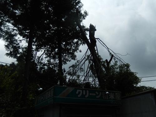2014.6.10 大木を切る 025 (2)