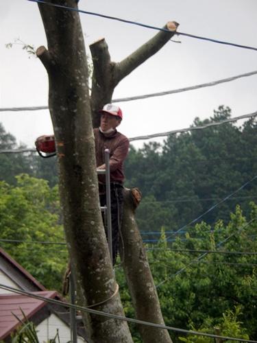 2014.6.10 大木を伐採 044 (2)