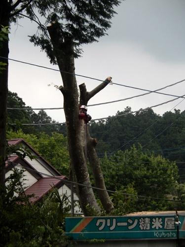 2014.6.10 大木を伐採 044