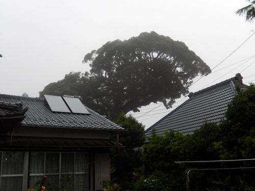 2014.6.26 霧の朝 038 (3)