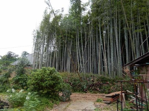 2014.7.7 杉の伐採 021 (3)
