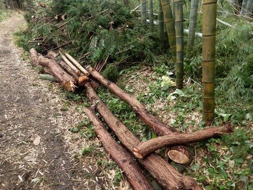 2014.7.7 杉の伐採 021