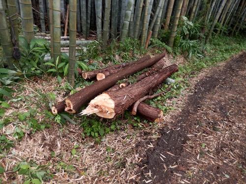 2014.7.7 杉の伐採 021 (8)