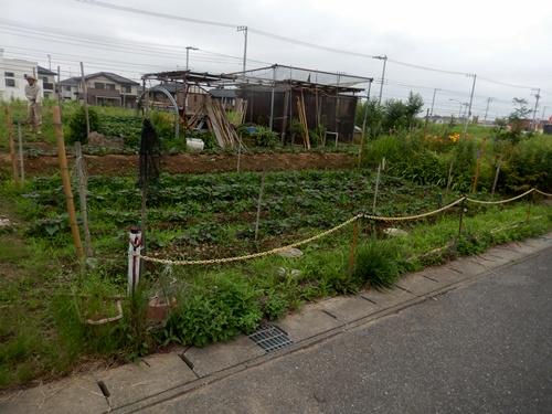 2014.7.9 市民農園 026 (1)