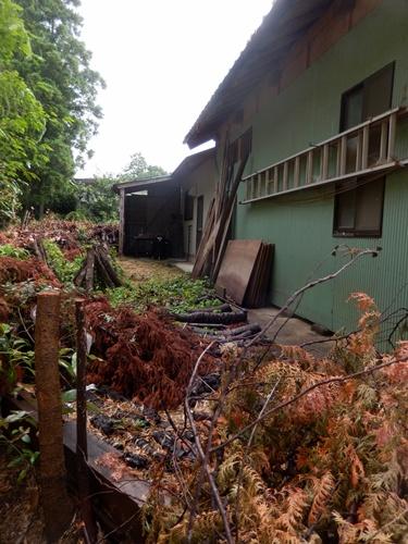 2014.8.10 台風の朝 067 (10)