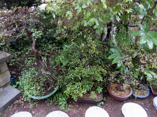 2014.8.10 台風の朝 067 (5)
