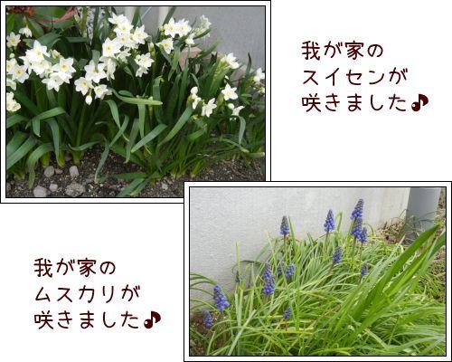 20140401-04.jpg
