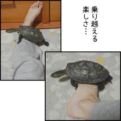 20140604-04.jpg