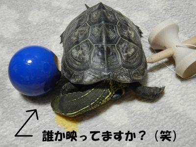 20140813-01.jpg