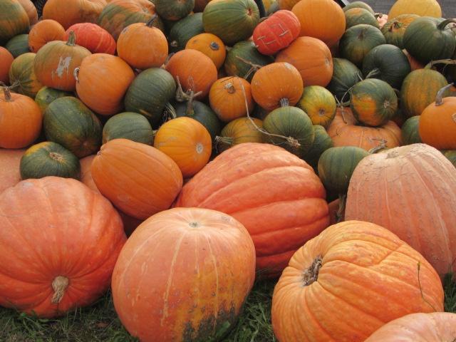 北の大地のかぼちゃ 本文と無関係なり