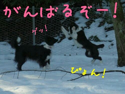fc2_2014-04-16_00-08-05-353.jpg