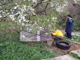 3:31・スモモの花と兎小屋