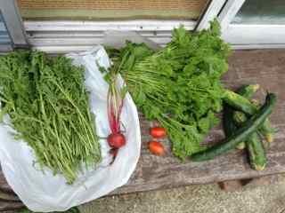 6:9・野菜の収穫