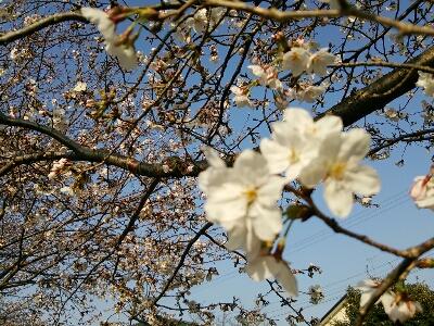 fc2_2014-04-03_22-18-59-556.jpg