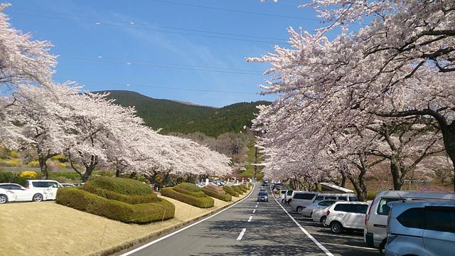 富士霊園2014_1