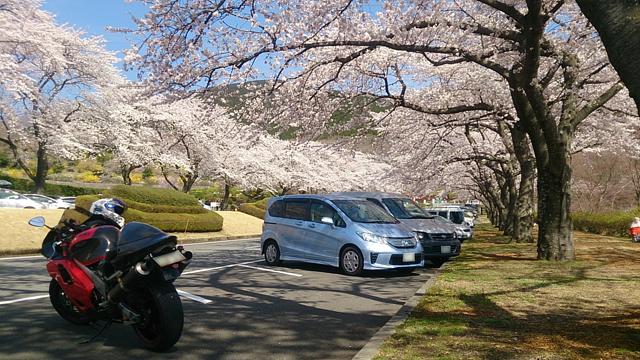 富士霊園2014_2